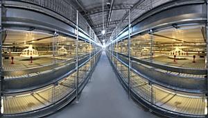 Предлагаем 4 вида клеточных батарей для выращивания цыплят бройлеров: - с внутриклеточной системой кормления и...